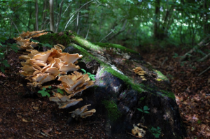 A dark forest scene. Moss and fungi are clearly seen growing on the ground. A canopy of tree branches is overhead.