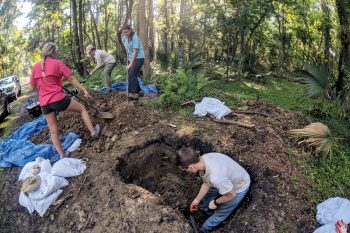 Searching for late Pleistocene-aged fossils by digging holes adjacent to a water canal in Brunswick, Georgia, may not appeal to some students, but it did for UNG faculty members David and Jessica Patterson, alumna Kayla Allen and nine undergraduate students.