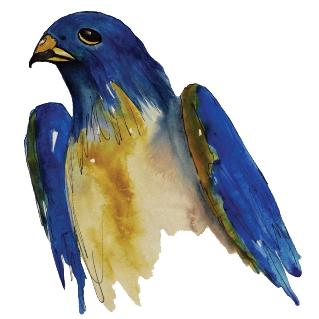 A watercolor depiction of Nigel the Nighthawk. NIgel's head and wings are a rich blue and his stomach and beak are bright gold.